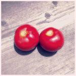 トマトの成長記録⑥ ~収穫編~