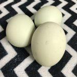 安田養鶏農場の『幸せの青い卵』♪